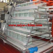 Taiyu metal chicken cage (full poultry equipment and own oversea agent)
