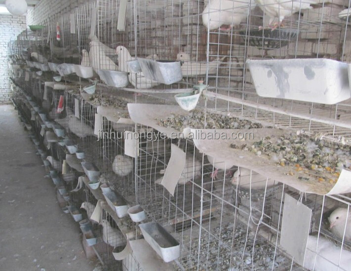 acrylic bird cage /stainless steel bird cage wire mesh/bird cage wire panels