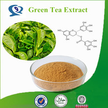 100% natrual Chinese Green Tea Powder Extract
