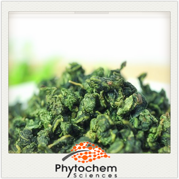 Chinese treating diabetes product Oolong Tea Extract 30% Polyphenols