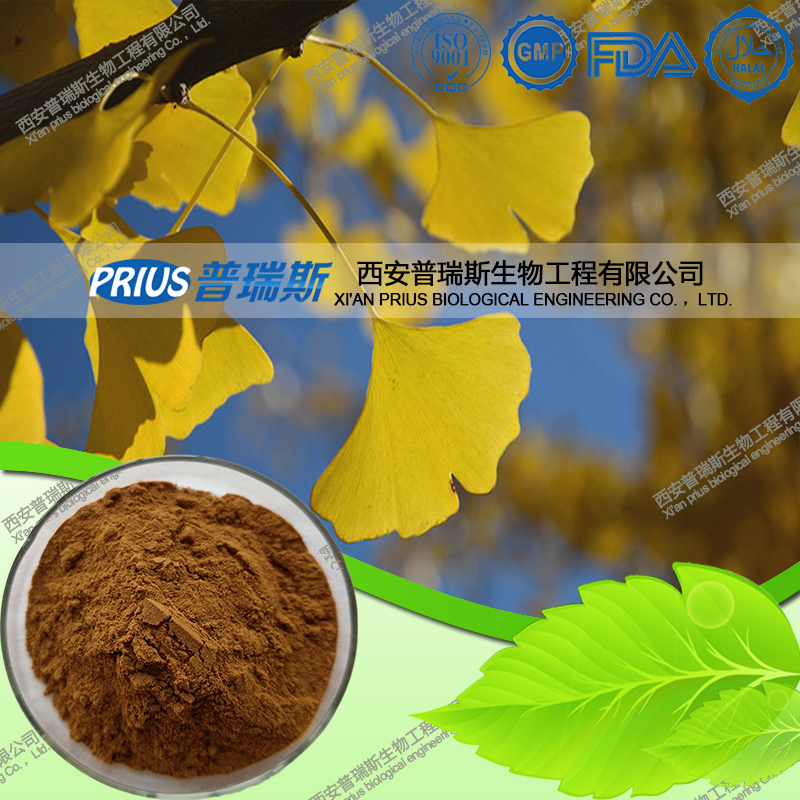 supply best price natural ginkgo biloba P.E.
