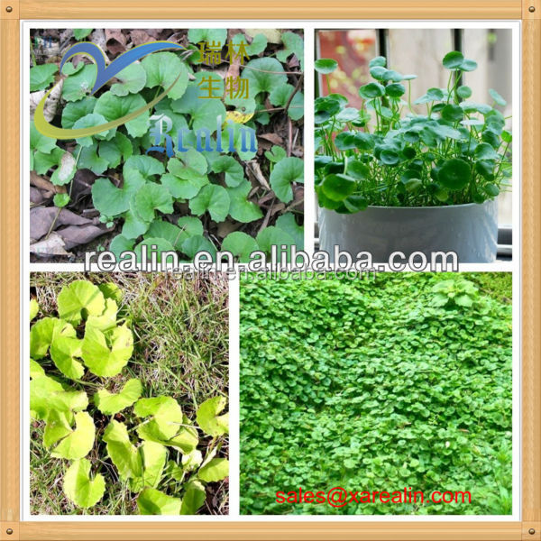 100% natural Titrated Extract of Centella Asiatica(TECA)