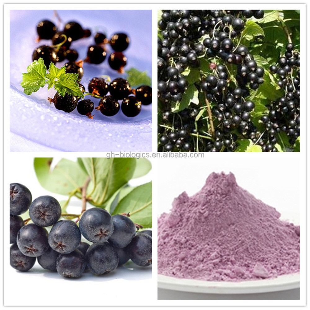Natrual Antioxidant Black Currant Extract Powder 25% Anthocyanins HPLC