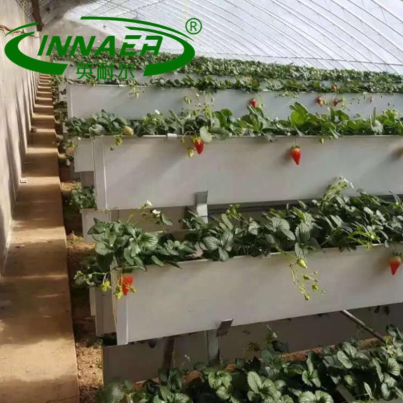 High quality kohlrabi planting groove for Vegetable