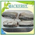 canned mackerel supplier
