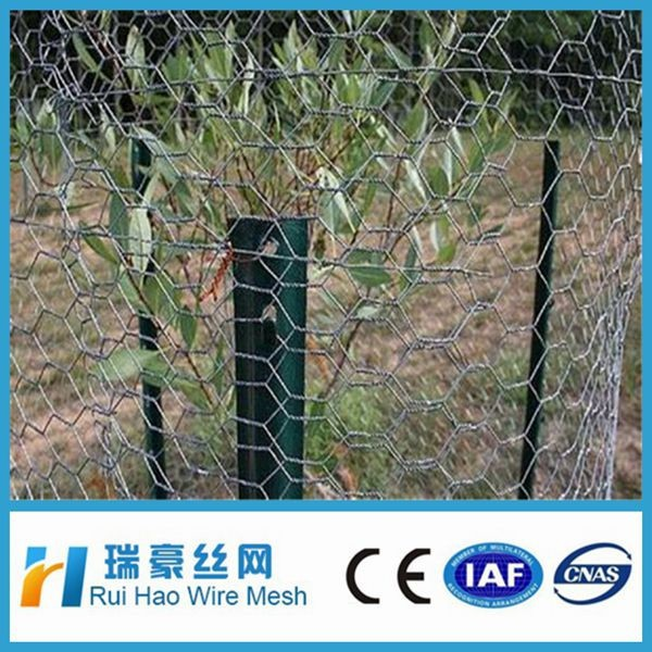 1/4 Inch Galvanized Green PVC Coated Small Hole Chicken Wire Mesh