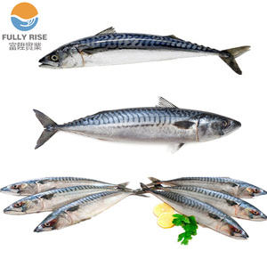 Cheap Price Mackerel for can processing High Quality frozen fish