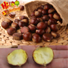 Best Chinese chestnuts for sale--Organic kuancheng Chestnuts