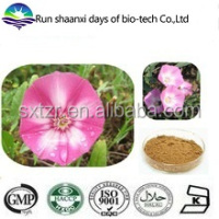Natural Herb Convolvulus Arvensis Extract Powder Field Bindweed P.E.