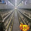 alibaba express design layer chicken cages/chicken egg layer cages/chicken laying cage