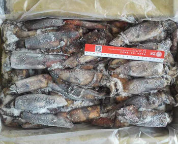 frozen seafood high quality black squid hainan loligo for bait Chinese supplier