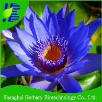 Blue Water lily seeds with giant bloom