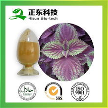 Spary Dried Perilla Extract Powder TLC 10:1