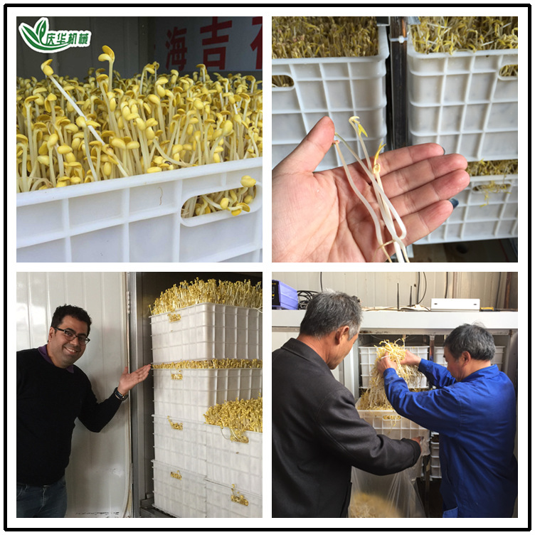 Commercial Automatic Bean Sprouts Machine Mass Production Bean Sprouts