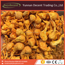 Herbal Chinese medicine Cordyceps flower for human health care product