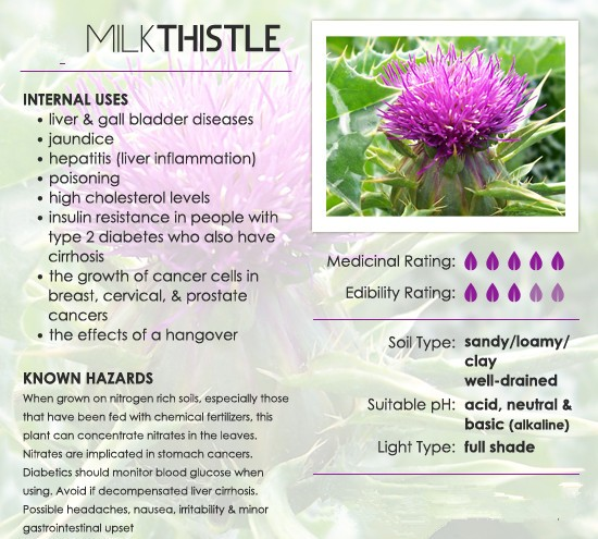 Herbal Extract Silymarin Milk Thistle Extract With Liver Protection
