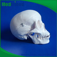 MFM004 Wholesale From China Human Skull