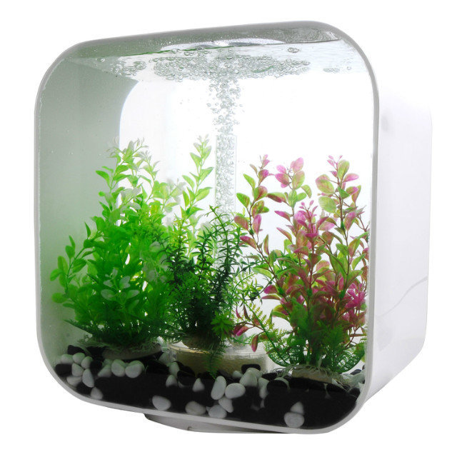 Small and Exquisite Wall Hang Acrylic Aquarium