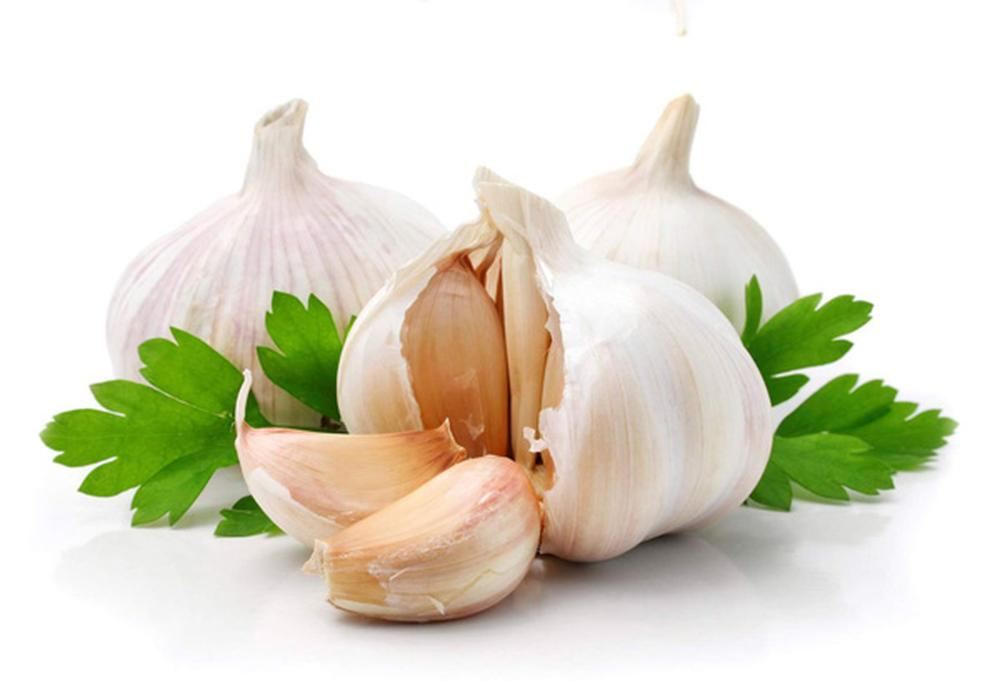 High quality organic Garlic Oil for bulk sale with cheap price