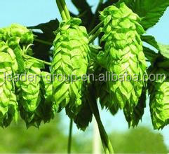 Leader-12 Factory Price High Quality Black Cohosh Extract