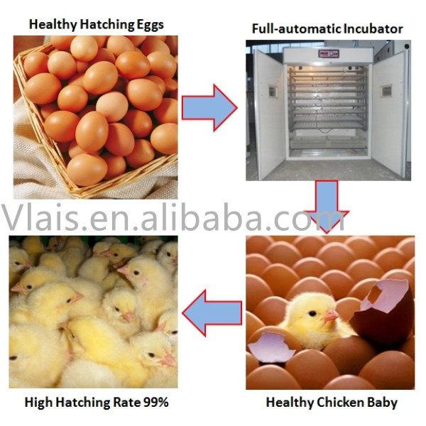 High hatchability best selling egg incubator price, egg chicken incubator 3520 eggs