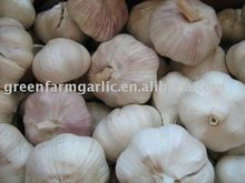 Jining greenfarm fresh garlic 2013