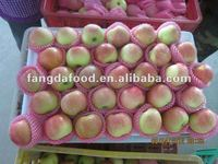 2014 Fresh Red Star Apple Hot Selling