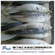 whole round frozen horse mackerel for sale