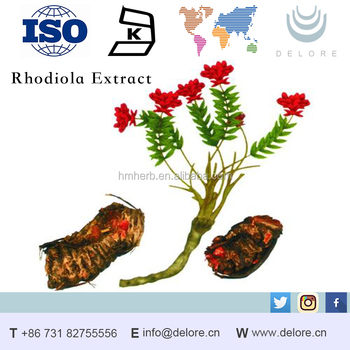Natural Rhodiola Rosea Extract Powder with best price HPLC Salidroside 3%