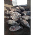 Freshwater frozen whole tilapia from Fujian China