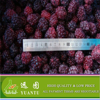Frozen Blackberry From China Export Market