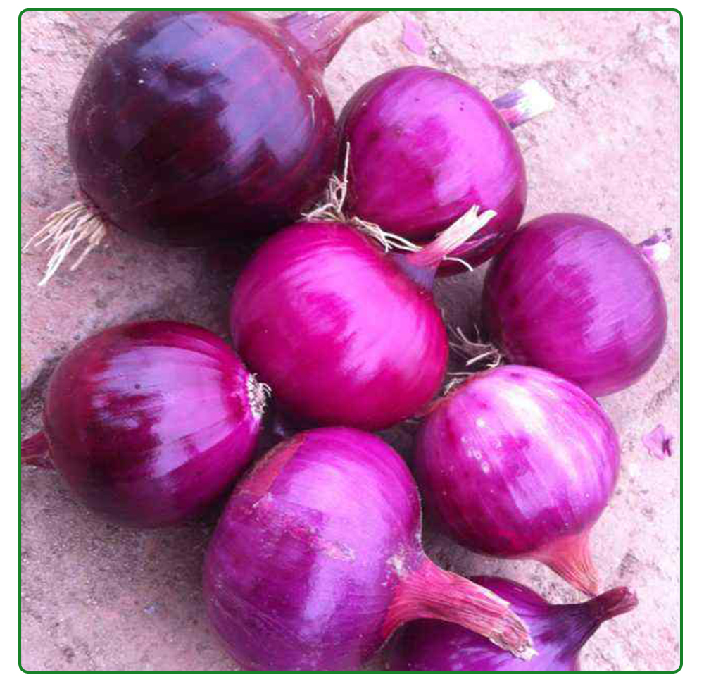 price of Chian top qualtiy fresh onions for sale