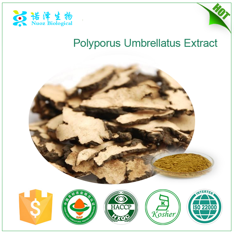 100% natural organic polyporus umbellatus extract,Zhuling extract