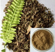 natural skin care hederagenin in herbal extract ivy leaf extract powder