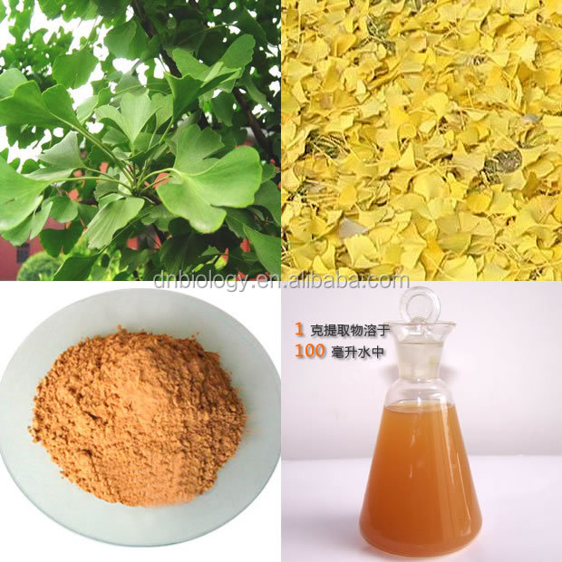 ISO9001 Factory Pure Natural 24% Glycosides 6% Terpenelactones Ginkgo Biloba Extract