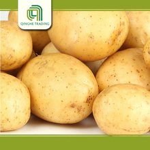 Hot selling vegetable Chines potato with high quality