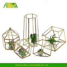 tabletop plants holder indoor holders glass anomalous plant terrarium