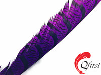 Best selling plumes size from 30 to 35 inches dyed purple zebra lady amherst pheasant tail super long feathers