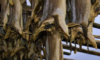 StockFish and Frozen Fish From Norway
