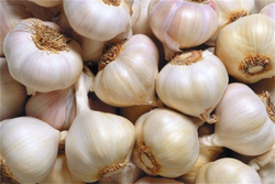 test strictly 2015 hot sale grade a fresh garlic for sale