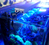 Cheap chinese led aquarium light for nano marine use