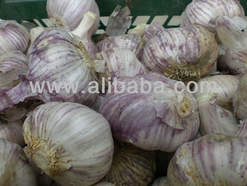 Garlic purple / Ajo violeta