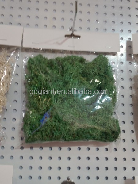 American most hot selling decorative floral natural moss.