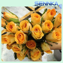 Pure and top sell wedding flower rose