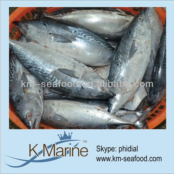 Kinds of fishes tuna