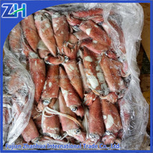 New Arrival Frozen Chinese Loligo Squid Chinensis Seafood
