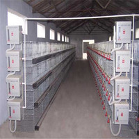 type H layer chicken cage hebei factory