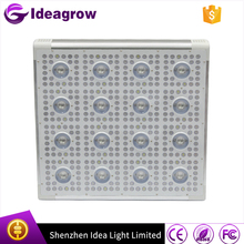 New apollo horticulture 300w 600w 800w 900w 1000w High Power full spectrum COB plant led grow lighting
