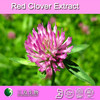 8%~80% Isoflavones red clover p.e red clover leaf extract