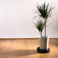 High Quality standard Bamboo Flooring ECO Friendly
